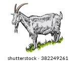 Drawing Of White Horned Goat O...