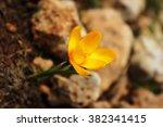the yellow mountain flower