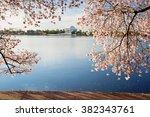 Cherry Blossoms Sunrise In...