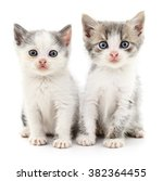Stock photo two small kittens isolated on white background 382364455