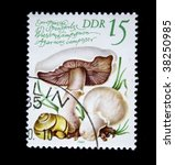 Small photo of GDR - CIRCA 1980: A stamp printed in GDR (East Germany) shows the mushroom Agaricus campestris, one stamp from series, circa 1980.
