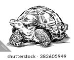 engrave ink draw turtle... | Shutterstock .eps vector #382605949