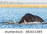 african elephant swimming in... | Shutterstock . vector #382611385