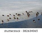 ducks on ice shelf | Shutterstock . vector #382634065