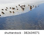 ducks on ice shelf | Shutterstock . vector #382634071
