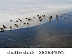 ducks on ice shelf | Shutterstock . vector #382634095