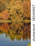 autumn trees with reflection | Shutterstock . vector #382654027