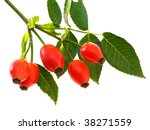 Branch Of Dog Rose With Hips ...