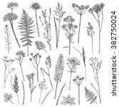 set of illustrations of plants. ... | Shutterstock .eps vector #382750024