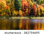 Fall Trees In Vermont On The...