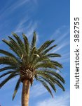 canary island date palm in san... | Shutterstock . vector #382755
