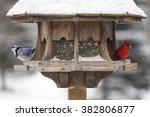 Red Cardinal And Blue Jay At...