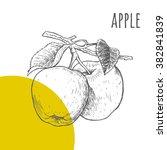 apple vector freehand pencil... | Shutterstock .eps vector #382841839