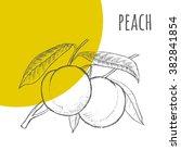 Peach Vector Freehand Pencil...