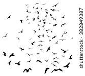 seagulls black silhouette on... | Shutterstock .eps vector #382849387