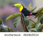 perching high..this beautiful... | Shutterstock . vector #382865014