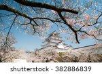 Cherry Blossom At Tsuruga Castle