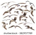 Seagulls Birds Set Isolated On...