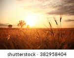 Sunset In Europe In A Wheat...