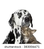 Stock photo close friendship between a cat and a dog 383006671