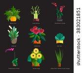illustration of houseplants ...   Shutterstock .eps vector #383021851