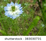 Small photo of Nigella damascena or love-in-a-mist flower with copy space
