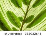 calathea makoyana close up ... | Shutterstock . vector #383032645