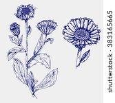 set of medicinal plant. ball... | Shutterstock .eps vector #383165665