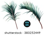 vector tropical palm leaves ... | Shutterstock .eps vector #383252449