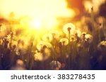 spring dandelion field over... | Shutterstock . vector #383278435