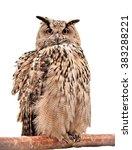 Stock photo owl isolated on white 383288221
