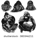 gorilla sketch isolated on... | Shutterstock .eps vector #383346211