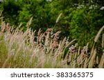 the grass on the way | Shutterstock . vector #383365375