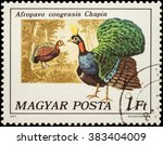 "Small photo of MOSCOW, RUSSIA - FEBRUARY 28, 2016: A stamp printed in Hungary shows Congo peafowl (Afropavo congensis), series ""Birds - Peacocks and Pheasants"", circa 1977"