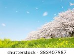 Cherry Blossom  Japanese Spring ...