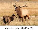 bull elk | Shutterstock . vector #38345590