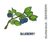 blueberry on branch. hand drawn ... | Shutterstock .eps vector #383458594