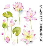 lilies and lotuses on a white... | Shutterstock . vector #383469409