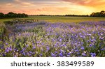 sunset over a wild flowers in... | Shutterstock . vector #383499589
