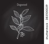 branch of   dogwood plant with... | Shutterstock .eps vector #383500039
