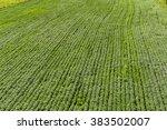pure farmland | Shutterstock . vector #383502007