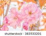 sakura flower cherry blossom....   Shutterstock . vector #383533201
