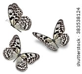 Three Black And White Butterfl...