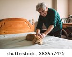 elderly woman petting her cat... | Shutterstock . vector #383657425