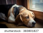 Sad Dog On The Window Sill