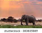 Portrait Of African Elephants...