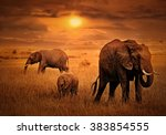 Elephants At African Sunset...