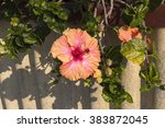 showy pink suffused with orange ... | Shutterstock . vector #383872045