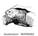 turtle sketch   vector   Shutterstock .eps vector #383908381