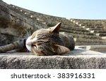 Sleeping Stray Cat Enjoying The ...
